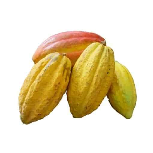 Kakaopulver | Kakaonibs